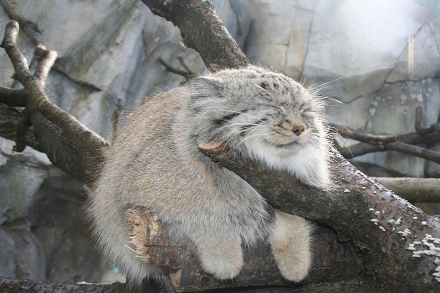 raros gatos salvajes 3