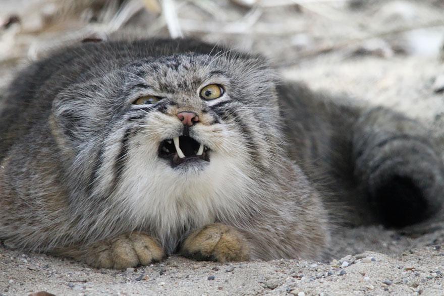raros gatos salvajes 4