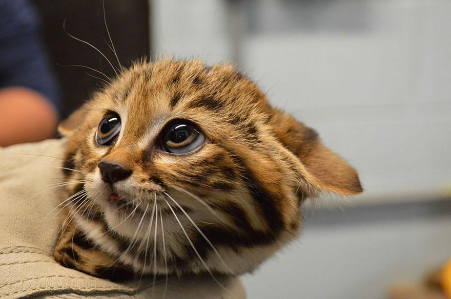 raros gatos salvajes 5