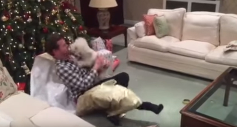 regalo-de-navidad-para-su-perro2