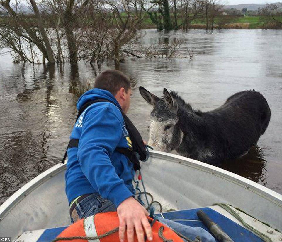 rescate-burro-irlanda4