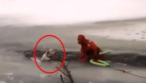 rescate-perro-hielo2