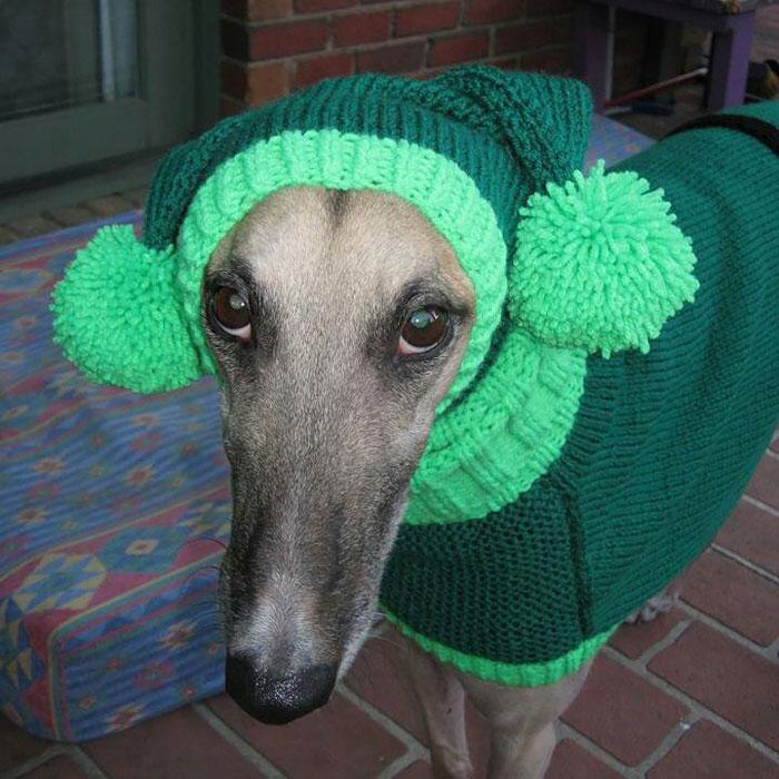sweateres para perros 2