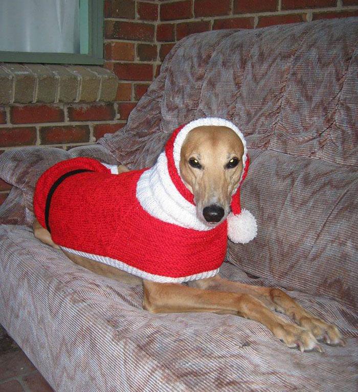 sweateres para perros 5