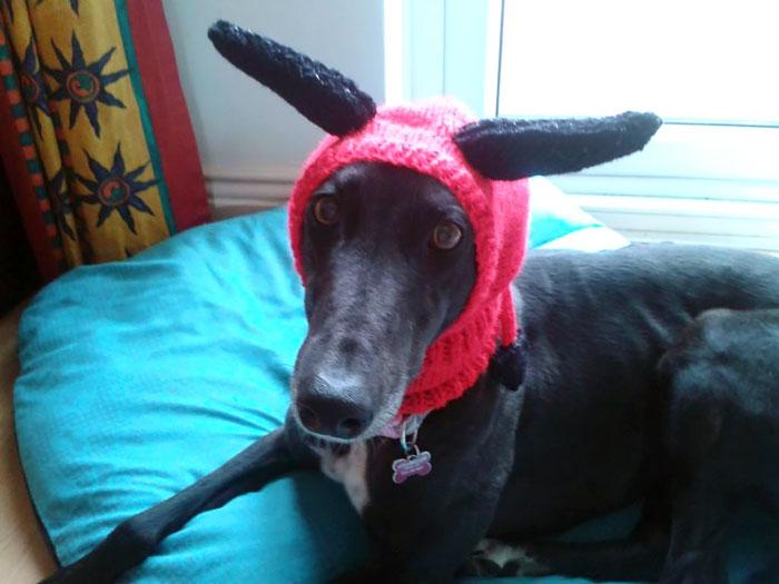 sweateres para perros 9