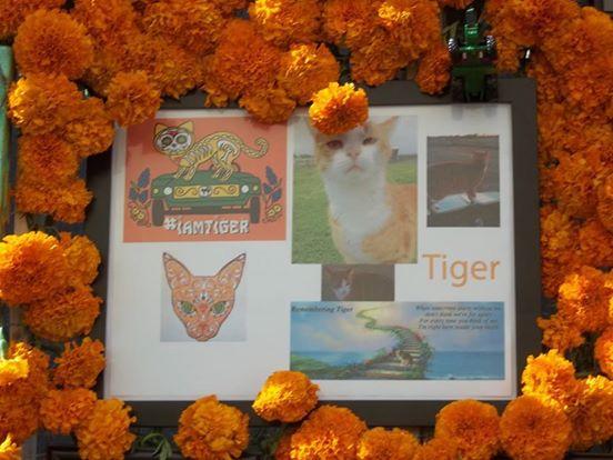 tributo a tiger 3