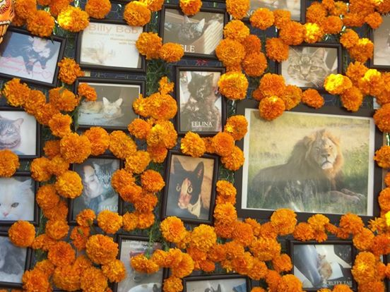 tributo a tiger 4