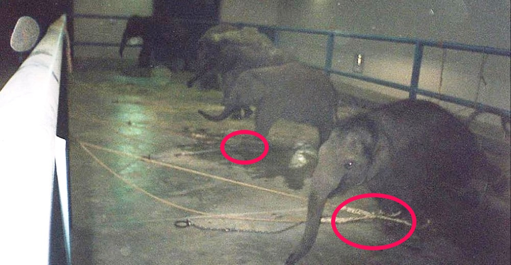 tristeza-elefantes-circo1 - copia