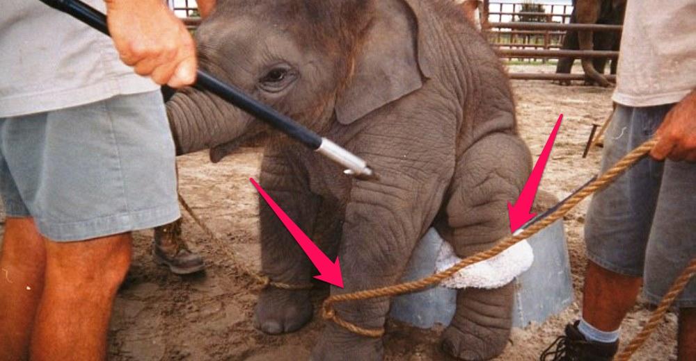 tristeza-elefantes-circo4 - copia