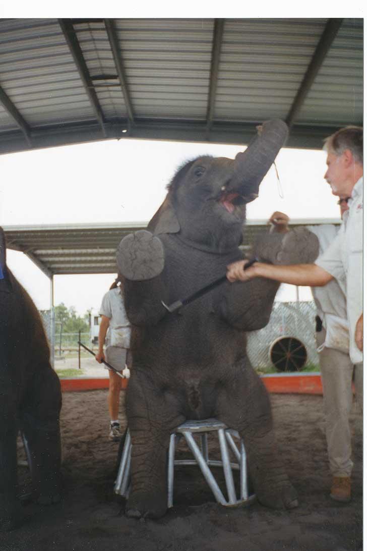 tristeza-elefantes-circo6