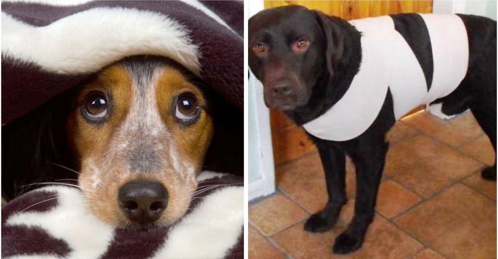 Tu perro se asusta mucho con los fuegos artificiales - Es malo banar mucho a los perros ...