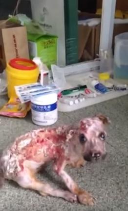 tuffy-perro-maltratado10