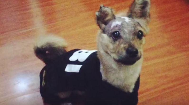 tuffy-perro-maltratado3