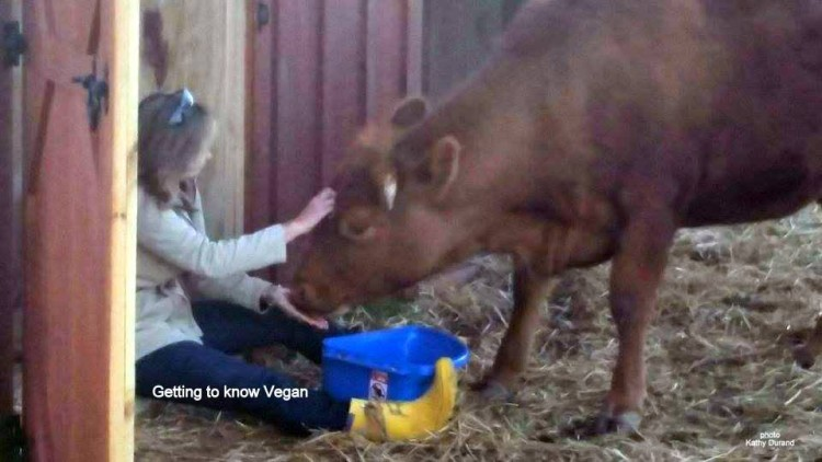 vaca vegan 2