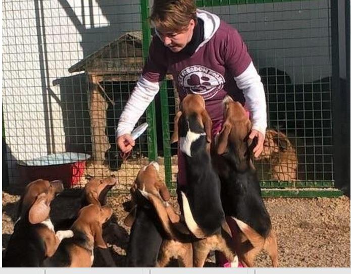 10 beagles rescatados 3