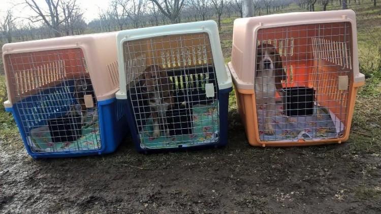 10 beagles rescatados 6