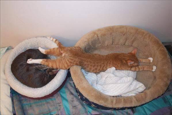 12-14 gaticos