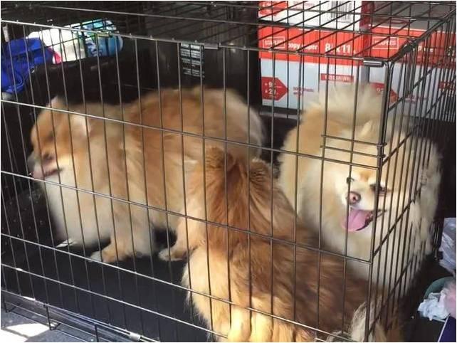 16 perros rescatados 5