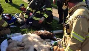 16 perros rescatados 6