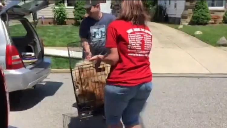 16 perros rescatados 9
