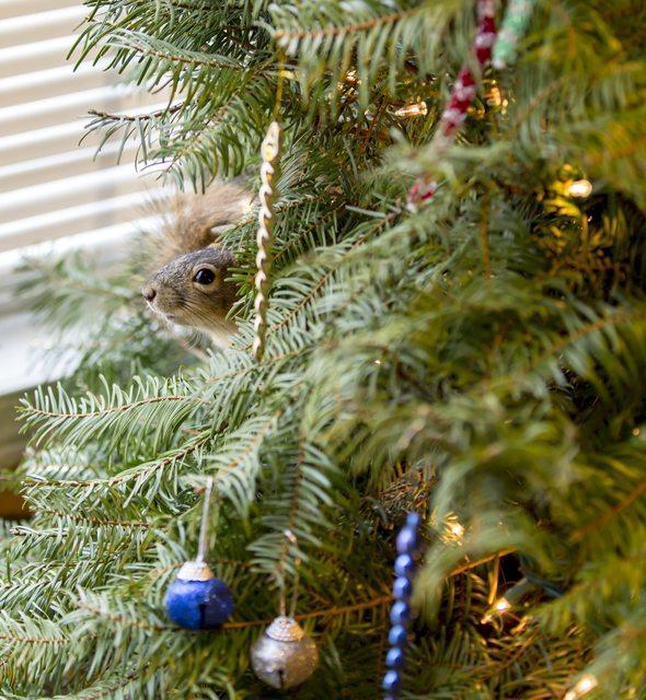 Ardilla Navidad 2