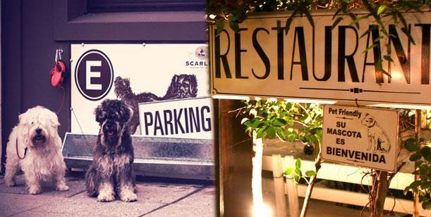 Estacionaminto para perros 7