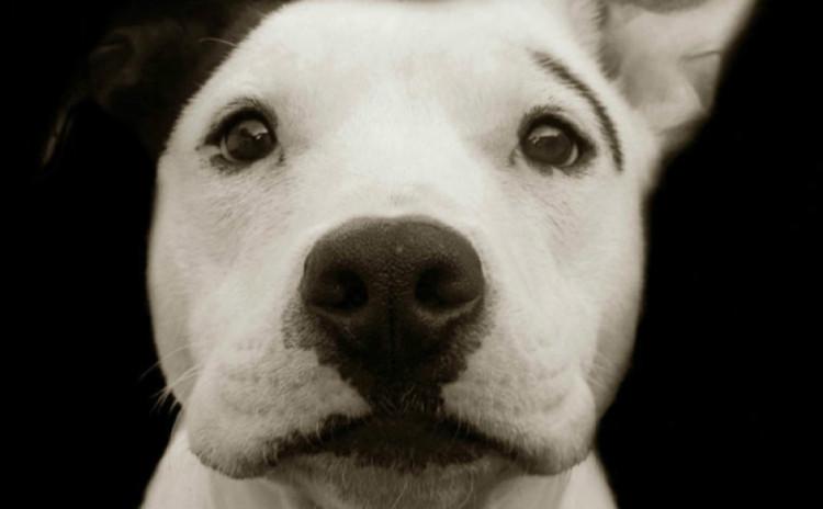 Fotos perritos 1