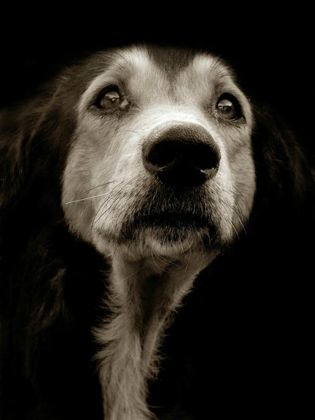 Fotos perritos 2