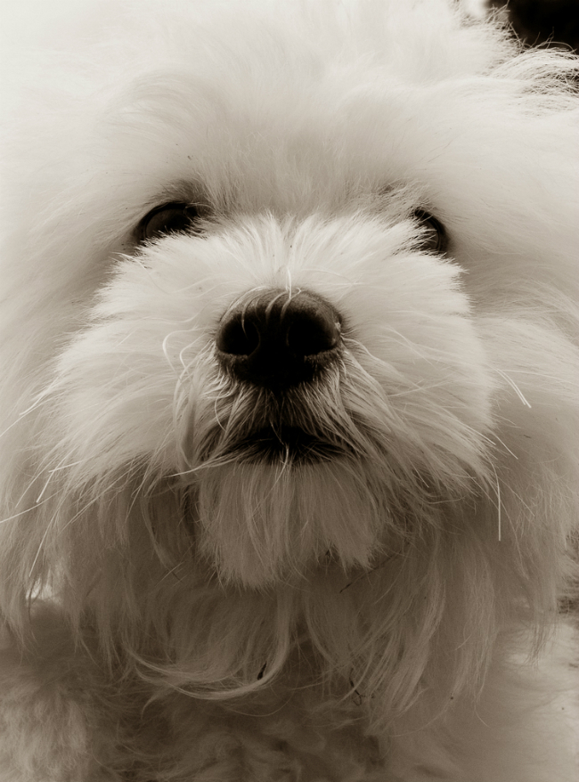 Fotos perritos 4