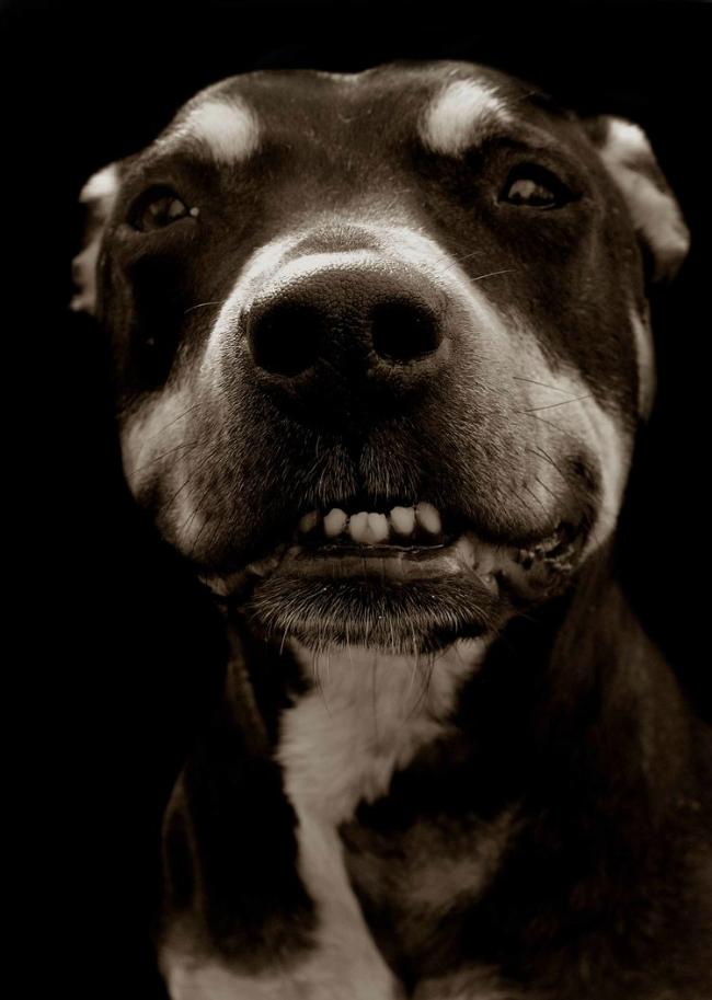 Fotos perritos 5
