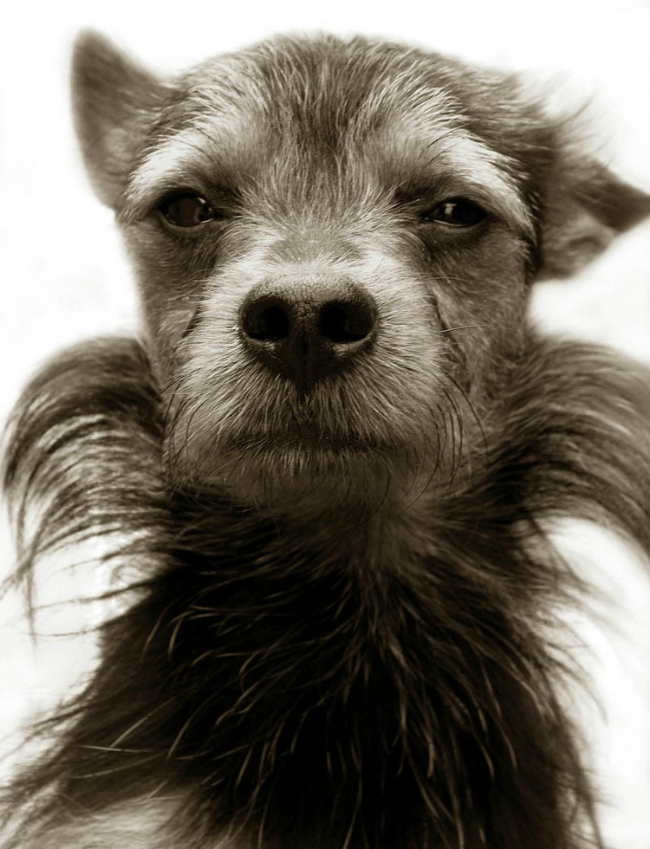 Fotos perritos 6