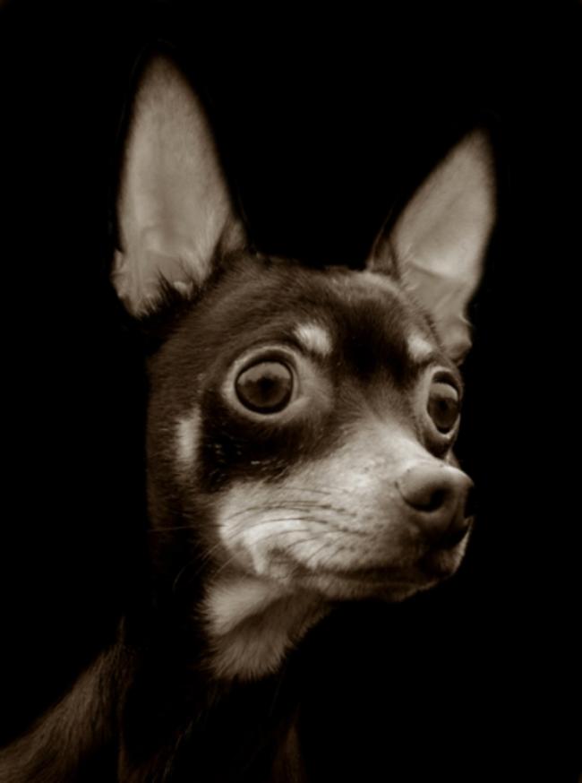 Fotos perritos 7