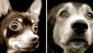Fotos perritos Traer portada