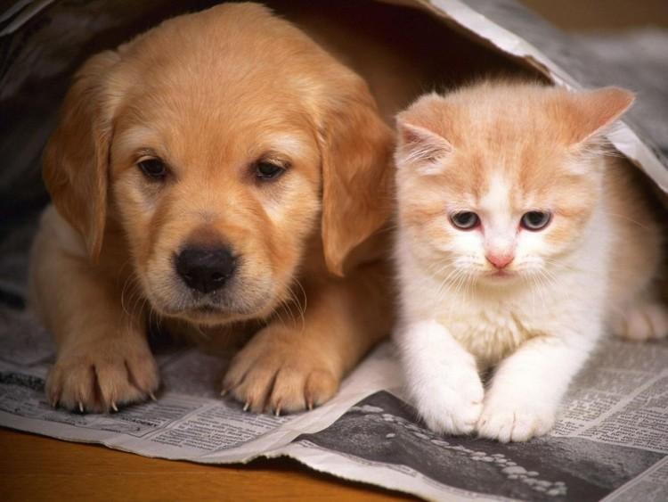 Perrito y gatico 1