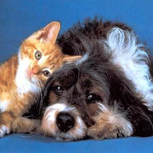 Perrito y gatico 4
