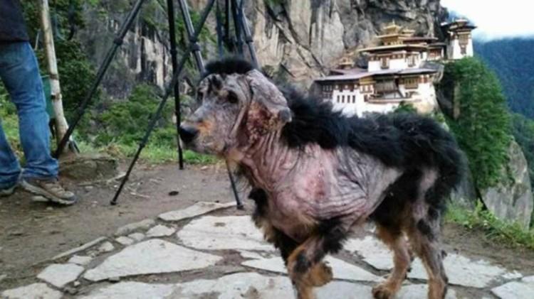 Perro encontrado sin pelo Templo 1