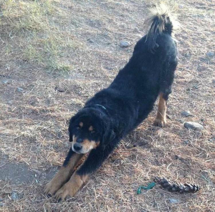Perro encontrado sin pelo Templo 5