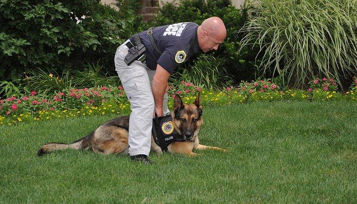 Perro policia 5