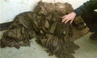 Perros vida horrible (bosas de basura) 1