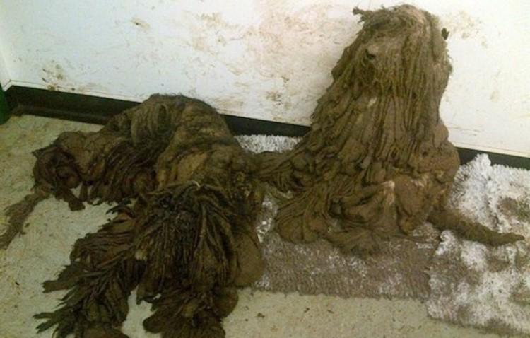 Perros vida horrible (bosas de basura) 2