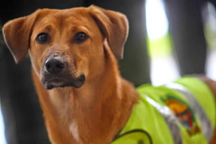 Policia Colombiano rescata a perro 6