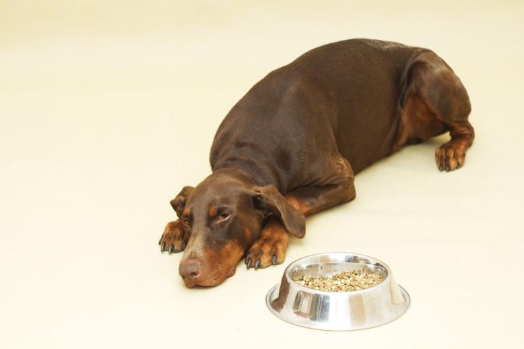 Señales de dolor perdida de apetito 2