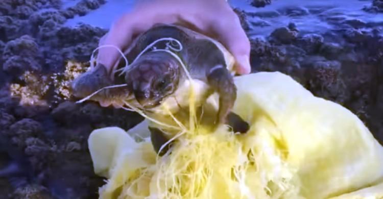 Tortuga Marina bebe rescatada 1 portada