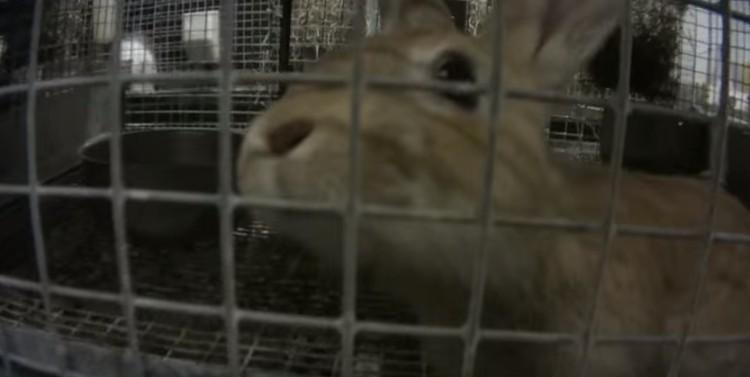 alimentos-para-animales-crueldad1