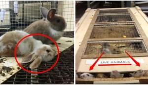 alimentos-para-animales-crueldad14 - copia
