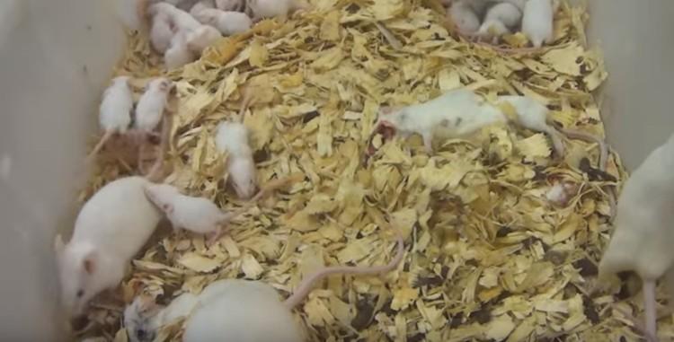 alimentos-para-animales-crueldad3