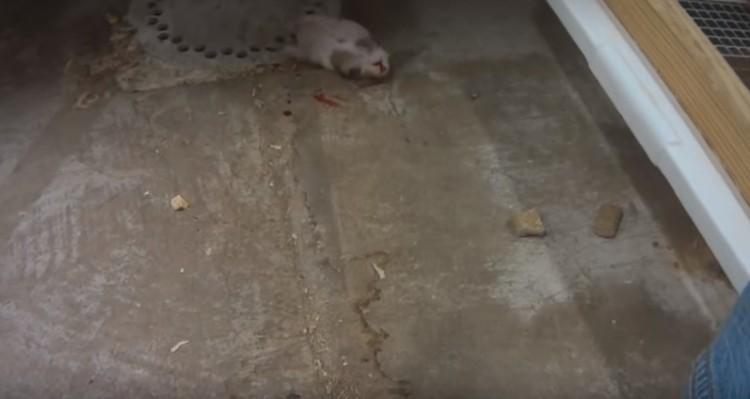 alimentos-para-animales-crueldad5