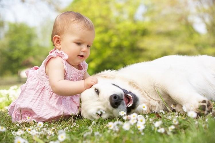 amar-a-perros-como-hijos2