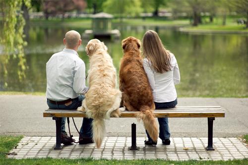 amar-a-perros-como-hijos3
