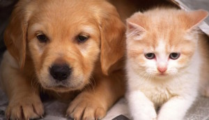 animales-adoptar